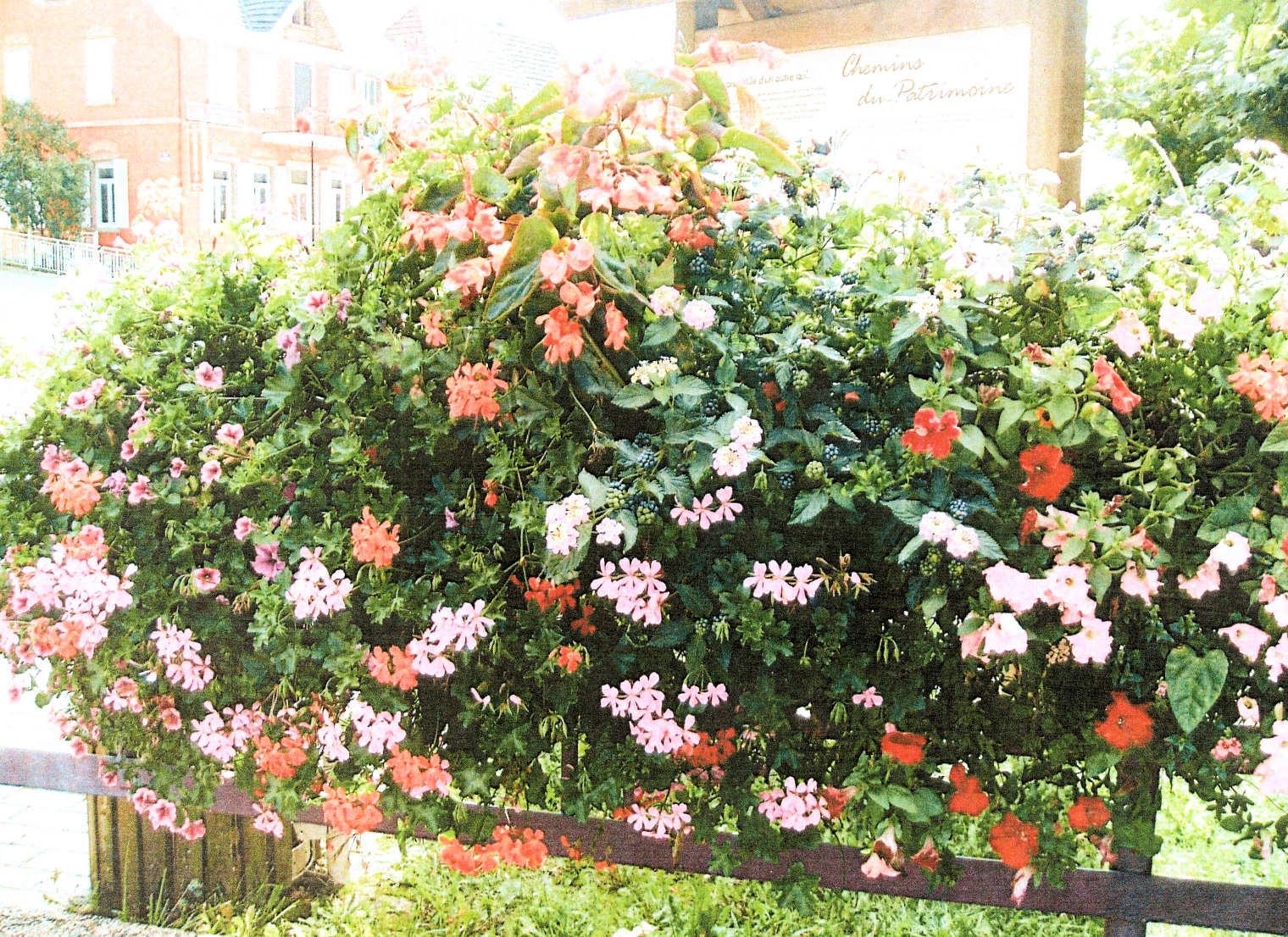 atout fleurs michel ledoux plantes de balcon. Black Bedroom Furniture Sets. Home Design Ideas